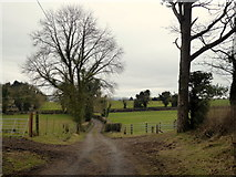 H4376 : Lane, Mountjoy Forest West Division by Kenneth  Allen