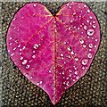 SO7127 : A natural pink heart by Jonathan Billinger