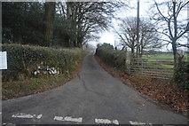 SX4975 : Narrow Devon lane by N Chadwick