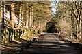 NY7148 : Minor road passing through trees by Trevor Littlewood
