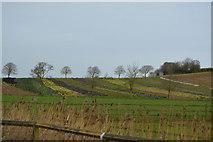 SX9788 : Fields, Darts Farm Village by N Chadwick