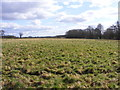 SJ8107 : Field View by Gordon Griffiths