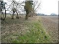 TL9097 : Field in Pockthorpe by David Howard