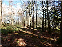 J3532 : Woodland on the north side of the main drive at Tollymore Forest Park by Eric Jones