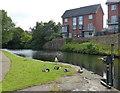 SD6826 : Canada geese on the Leeds and Liverpool Canal by Mat Fascione