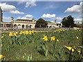 TF0406 : Daffodils near The Orangery, Burghley House by Richard Humphrey