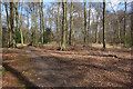 SU7288 : The Oxfordshire Way near Maidensgrove by Des Blenkinsopp