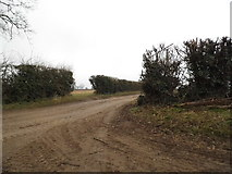 TL9893 : Muddy track off Rocklands Road, Shropham by David Howard