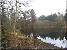 TL9094 : Pond in Waterhouse Plantation, Tottington by David Howard