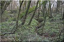 SX9267 : Woodland stream by N Chadwick