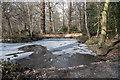 TQ2997 : Pond in Williams Wood, Trent Park by Christine Matthews