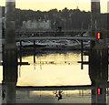 SX9163 : Cyclist in the harbour, Torquay by Derek Harper