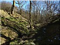 NS3678 : Burn flowing through woodland by Lairich Rig