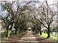 TG2008 : Spring in Earlham Road cemetery : Week 13