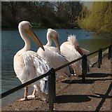 TQ2979 : Pelican's, St James' Park by Oast House Archive