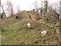 SO4870 : Goats running up the Motte at Richards Castle by Fabian Musto