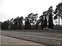 TL8985 : The A11 approaching Thetford by David Howard