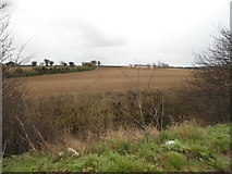 TL7273 : Fields by Newmarket Road, Barton Mills by David Howard