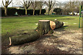 ST5775 : Felled tree, Redland Green by Derek Harper