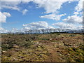 NS8747 : Clear-felled area, Cartland Muir Plantation by Alan O'Dowd
