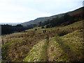 NZ0201 : Arkengarthdale valley-bottom footpath by Andy Waddington