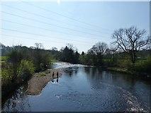 SJ9489 : River Goyt by Dave Dunford