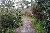 SX9057 : South West Coast Path by N Chadwick