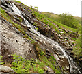 NY2312 : Rowan by Sour Milk Gill by Andy Waddington
