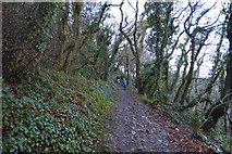 SX9364 : South West Coast Path (Bishop's Walk) by N Chadwick