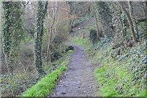 SX9464 : Bishop's Walk by N Chadwick