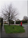 ST3091 : Deciduous tree on a Malpas corner, Newport by Jaggery