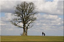 SO9875 : A couple stand beside a tree by Philip Halling