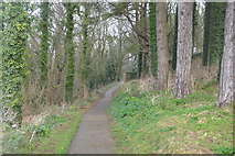 SX9156 : South West Coast Path by N Chadwick