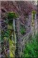 SO5632 : Railway fencing at Ballingham by John Winder