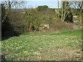 TA0661 : Primroses in the churchyard, Ruston Parva by Jonathan Thacker