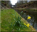 SP0592 : Freeth Bridge and the Tame Valley Canal by Mat Fascione