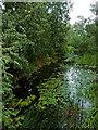 SP4977 : River Avon at Newbold in Warwickshire by Roger  Kidd