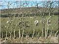 NY1734 : Hedge strengthened with wire mesh, near Linskeldfield by Christine Johnstone