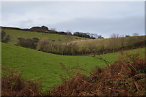 SX9269 : Devon field by N Chadwick