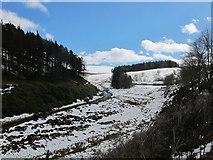 NJ3133 : River Fiddich at Glenfiddich Lodge by Alan Hodgson