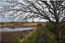 SZ3394 : New Forest : Solent Way by Lewis Clarke