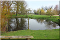 TM4395 : Pond near Toft Monks House by Des Blenkinsopp
