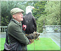 SX7384 : The Falconer with the Bald Eagle by Chris Reynolds