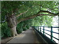 TQ2376 : Thames Path at Fulham by Eirian Evans