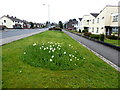 H4672 : Newly cut grass along Hospital Road by Kenneth  Allen