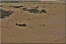 SX6781 : Dartmoor: Hurston Ridge by Michael Garlick