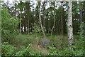 NS9692 : Fearns Wood by Richard Webb