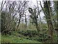 TQ7512 : RSPB Fore Wood by PAUL FARMER
