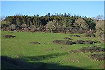SX9371 : Shaldon Approach Golf Course by N Chadwick