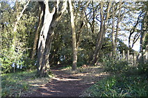SX9471 : South West Coast Path, The Ness by N Chadwick